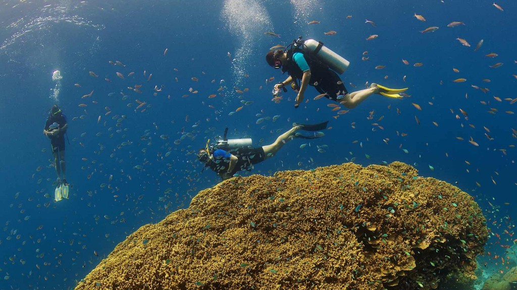 Oceandimensions_Laamu_Diving_Reef-1024x576