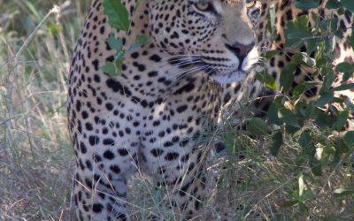 Wanderlust Wednesday: Two Day Luxury Safari at Sabi Sabi Earth Lodge