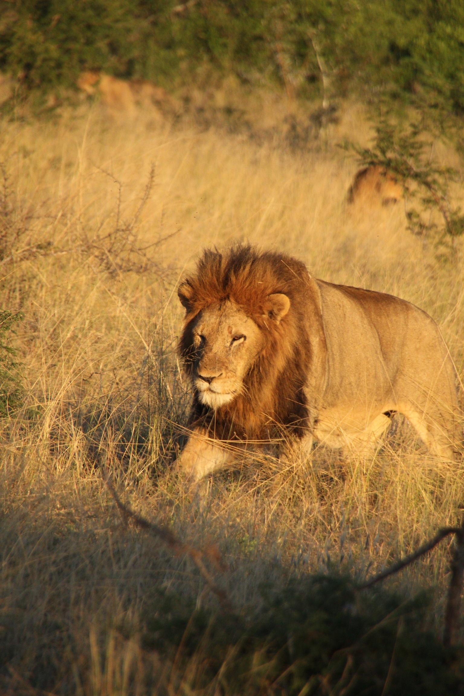 Wanderlust Wednesday: Two Day Luxury Safari at Royal Malewane